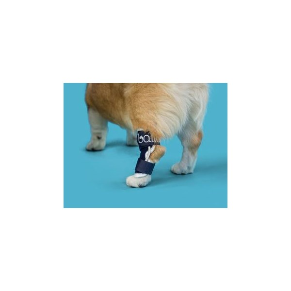 Balto Hock Brace Large