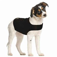 Zendog Shirt Extra Small Dog 12-17