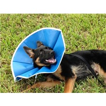 Recovery Collar Blue Cloth Small Dog 6-1/2