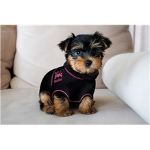 Medipaw 2 Piece Suit XXX Small Pink