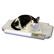 SR Scale Cat Table Top 19.5