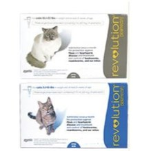 Revolution Cat 5.1-15lb 6ds Card Blue (Must purchase a minimum of 5 cards)